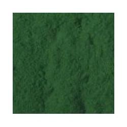 Vert fougère